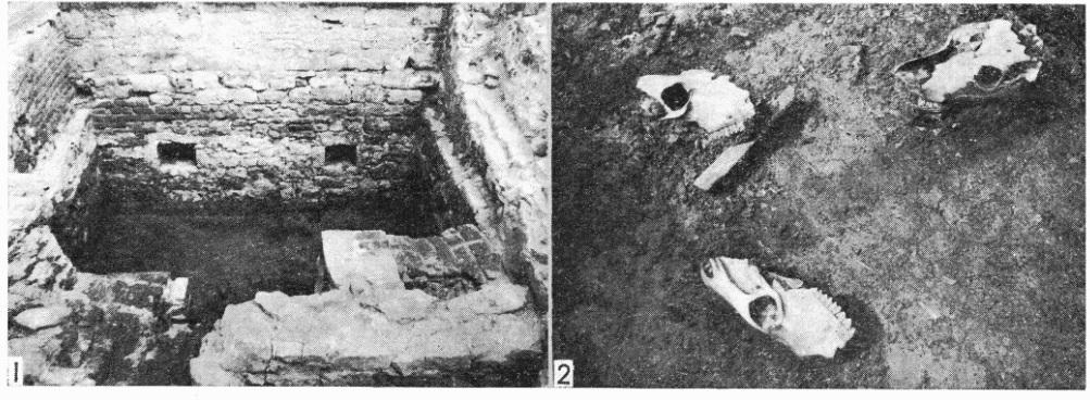 Вскрытый при раскопках подвальный этаж башни (1) и строительное жертвоприношение под стеной у башни Рамера (2)